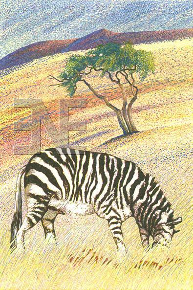 op_zebra-nr-ganab100